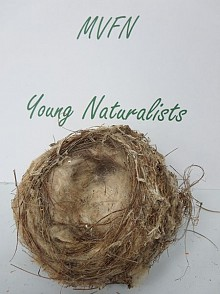 Appreciating nature can be as simple as admiring a bird nest. Photo: Lucy Martin