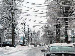Frozen power lines were snapped by falling tree limbs. Photo: Joanna Richards