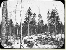 An Adirondack clearcut in the 1920s (Source:  New York State Archives)