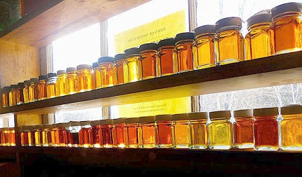 Bottles of the different grades of maple syrup produced at Uihlein Forest last year line the sugar shack's window.  Mike Farrell says every batch of syrup is different depending on the sap and how it was processed.  Photo: Todd Moe