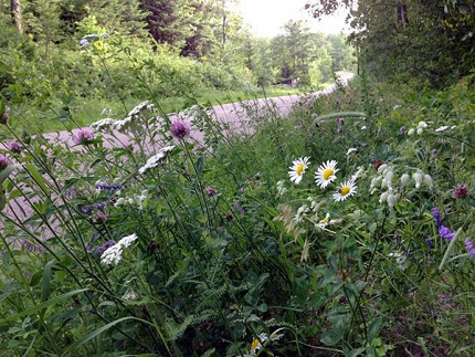 "Some less toxic roadside wildflowers. ""There's beauty everywhere,"" says Martha Foley, even in the ""breakdown lane"" along the Lake Ozonia Road."