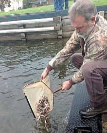 Jeff Lockington releases sturgeon into the St. Lawrence River. Photo: Sarah Harris