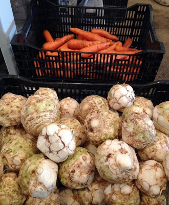 Celeriac and carrots, fresh out of the barrel washer and ready to be sent to the winter CSA drop-off points. Photo: David Sommerstein.
