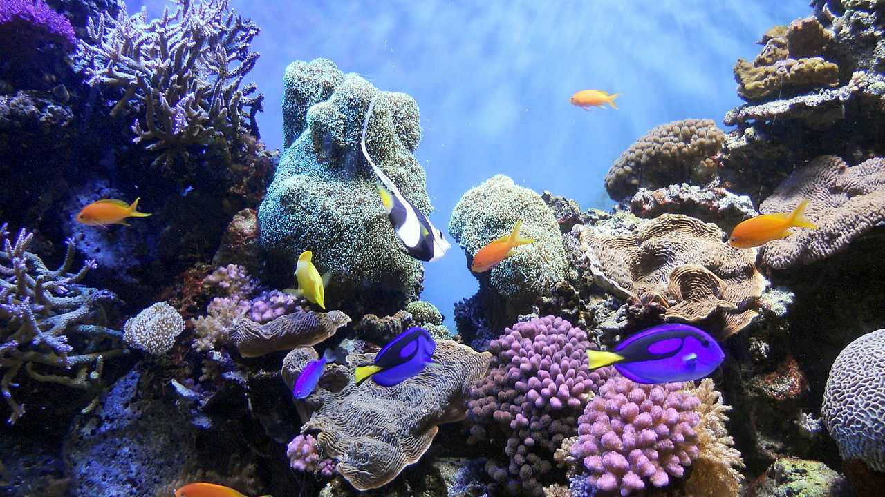 """Coral reef community. Photo: <a href=""""https://commons.wikimedia.org/wiki/File:Underwater_World.jpg"""">Fascinating Universe</a>, Creative Commons, some rights reserved"""