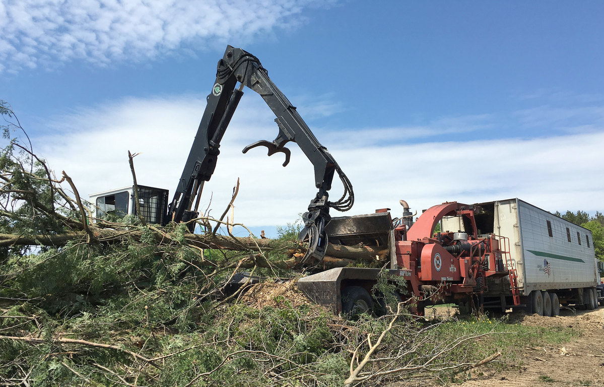 Is biomass energy still renewable some scientists say no