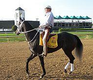 2008 Kentucky Derby horse Eight Belles was euthanized after breaking two ankles. Photo: Wikimedia Commons