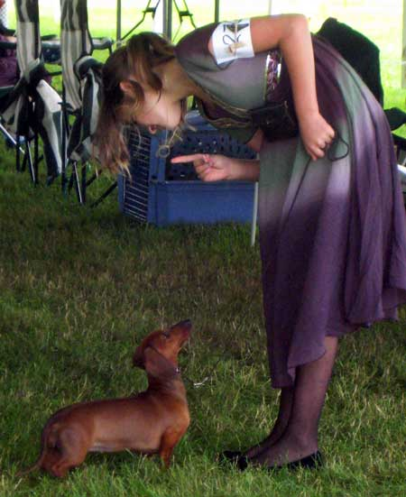 Pay attention! Dogs were shown by professional handlers, as well as owners of all ages.