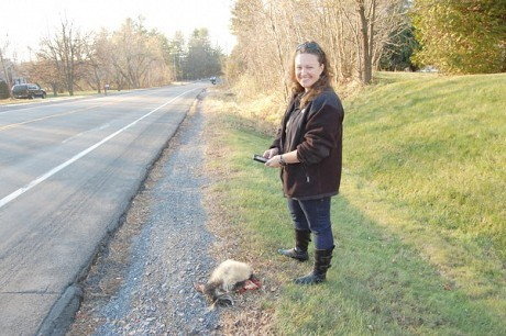 Danielle Garneau enters data about a dead skunk on Route 22B outside of Plattsburgh. Photo: Sarah Harris