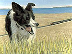 Sheep dog portrait by artist Michael Walker