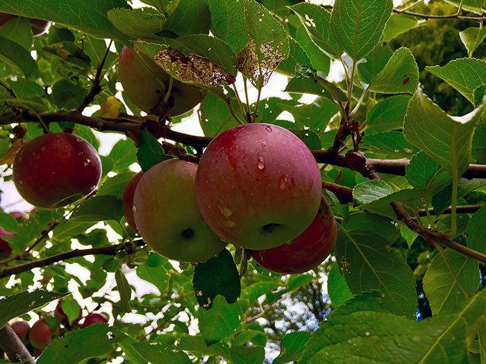 Health Food Apple Valley Ny