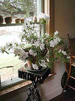 Martha's (formerly Mom's) azalea, Christmas Eve Day. Nice and green outside, too.