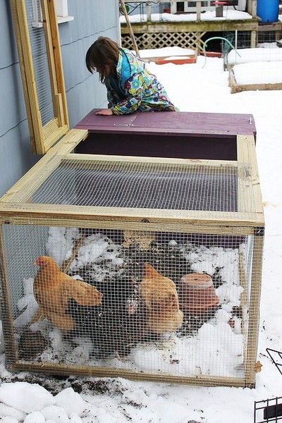 "Cities and towns around the country have started allowing chickens and other agricultural activities in residential areas.<br />Photo: Photo: <a href=""http://www.flickr.com/photos/11921146@N03/"">Rachel Tayse</a>, CC <a href=""http://creativecommons.org/licenses/by/2.0/deed.en"">some rights reserved</a>"