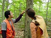 Jonathan Cale and Celia Evans examine scale on a beech tree near Paul Smiths