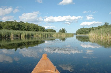 Green groups are hoping the new water levels plan improves wetlands along the St. Lawrence River. Photo: Jenni Werndorf