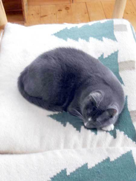 Shuttle the cat naps on a comfy wool cushion. Photo: Todd Moe