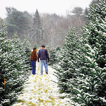 "Christmas tree farm. Photo: <a href=""http://www.flickr.com/photos/lunaspin/"">looseends</a>, CC <a href=""http://creativecommons.org/licenses/by-nc-sa/2.0/deed.en"">some rights reserved"