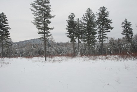 "A clearcut near Speculator managed by Lyme Timber. Sometimes a woodlot that looks heavily logged is being managed well, while a parcel with lots of trees can be made of ""junk"" timber. Photo used by permission"