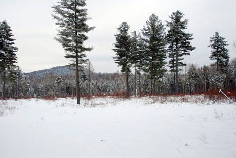 "A clear cut near Speculator managed by Lyme Timber.  Sometimes a woodlot that looks heavily logged is being managed well, while a parcel with lots of trees can be made of ""junk"" timber. Photo used by permission"