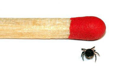 "This is how small a deer tick is. Photo: <a href=""http://commons.wikimedia.org/wiki/File:Tick_male_size_comparison_%28aka%29.jpg"">André Karwath</a>, Creative Commons, some rights reserved"