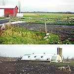 Kevin Sullivan's intensive grazing fields (top) and a conventional farm barnyard.