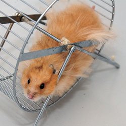 Hamster at day job. Photo: Sualk61 via Flickr, some rights reserved