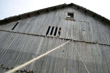 Dave Pasick sticks his head out of the barn on Szaro Farms outside  Utica, N.Y. Photo: Ryan Delaney/WRVO