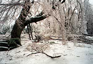 Martha Foley's back yard during the '98 ice storm