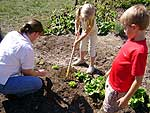 Julie Holbrook and Keene Central students weed a row of lettuce in the school's garden