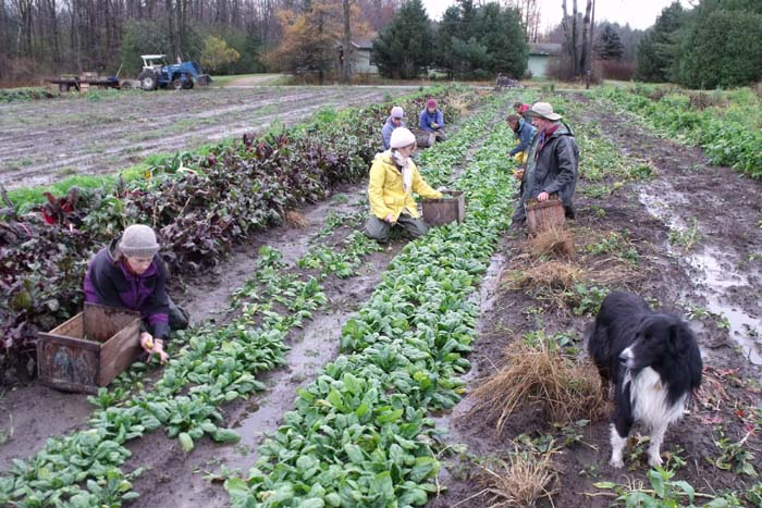 Chronicling The Dirty Life Of A North Country Farm Ncpr News