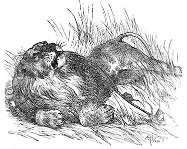 "Illustration for ""The Lion and the Mouse,"" Harrison Weir, from <em>Three Hundred Aesop's Fables</em> by George Fyler Townsend, 1867. Public domain."
