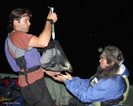 Researchers Rick Grey and Nina Schoch weigh an adult loon. Photo courtesy Biodiversity Research Institute's Center for Loon Conservation