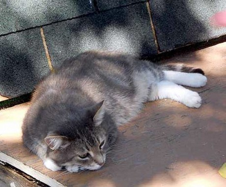 A cat nap in the shadow of Canada's Parliament.