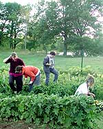 Jess Pletcher, Sara Gould, Shawn McGowan and Kiley Felch share garden chores.