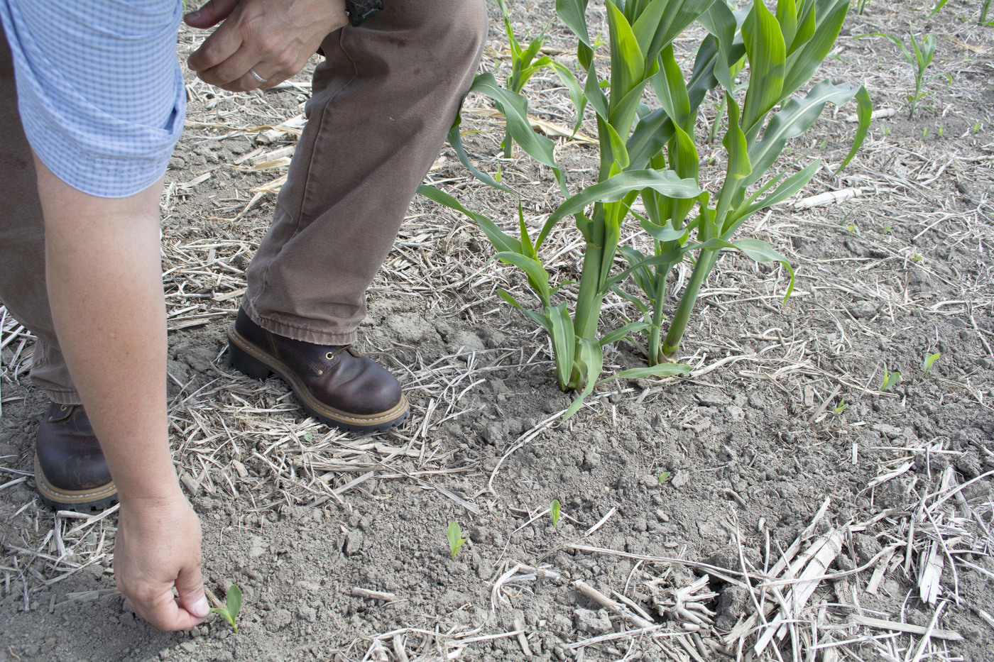 North Country farmers struggle to survive rainy planting