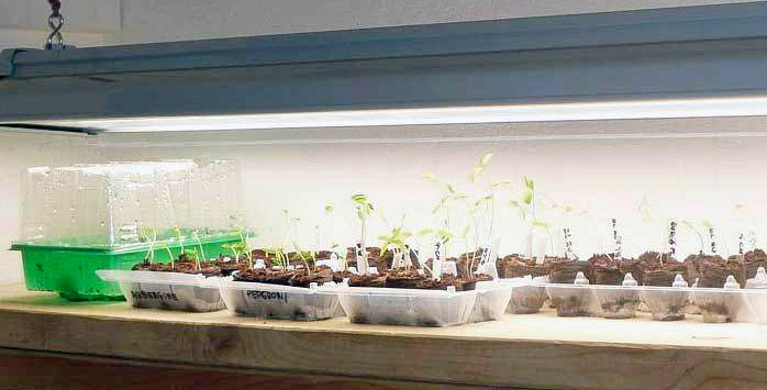 Starting The Garden From Scratch Ncpr News