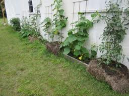 From last year's Garden Plot blog: Mike's garage-side trellises.
