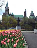 A bed of tulips near Parliament Hill (above). One of many 5' fiberglass tulips scattered around Ottawa (below).